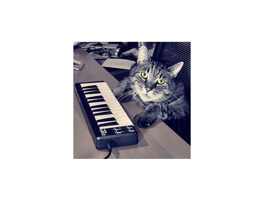 Furr The Studio Cat